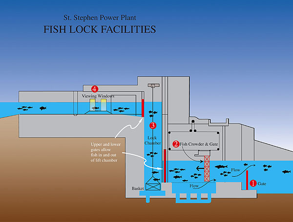 bypass and ladder to fishes in dams electrical e library com dam fish joke the fish lock is used in very high dams some dams have lifts to transport the fishes, after being attracted