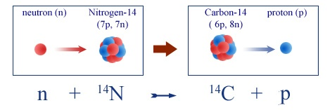 carbon 14 formation
